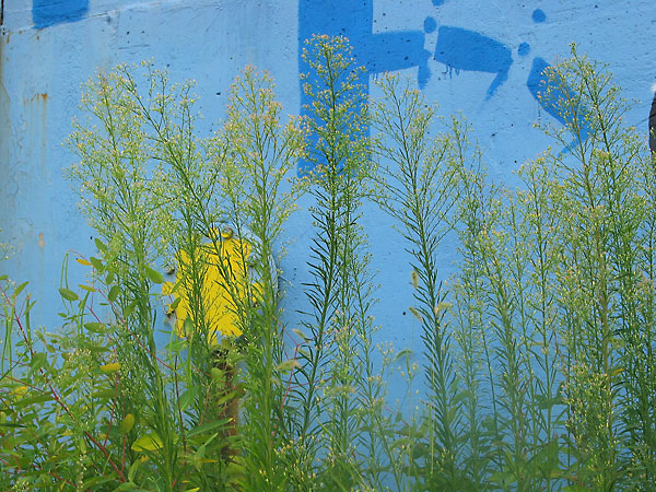 Blue/Yellow/Green, 2002, photo by Fred Hatt