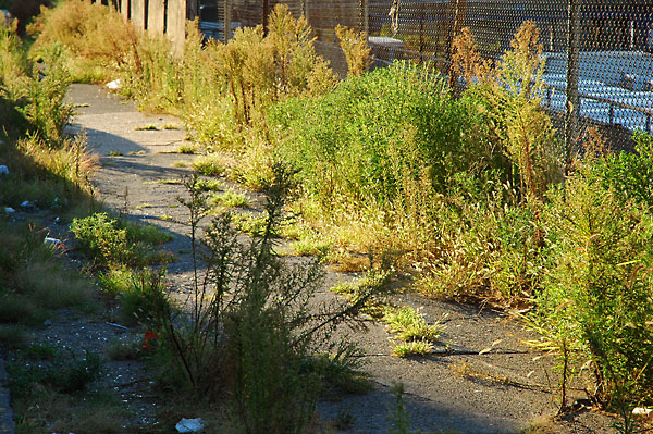 Sidewalk Reclaimed, 2004, photo by Fred Hatt