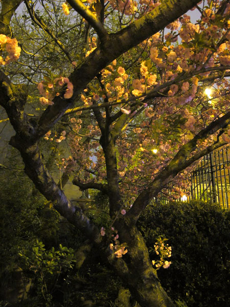 Garden at Night, 2010, photo by Fred Hatt