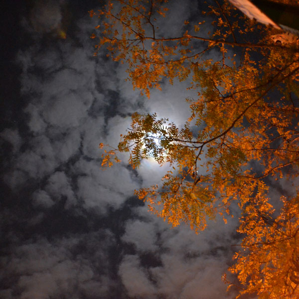 Tree and Moon, 2011, photo by Fred Hatt