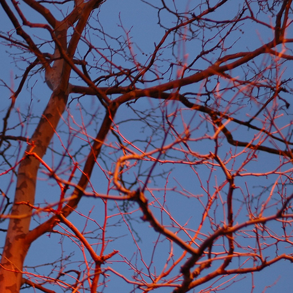 Vascular Tree, 2005, photo by Fred Hatt (detail)